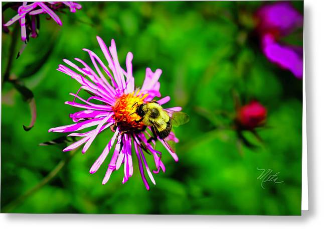 Greeting Card featuring the photograph Bee On Purple Flower by Meta Gatschenberger