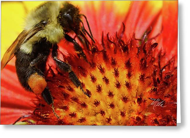 Bee Red Flower Greeting Card