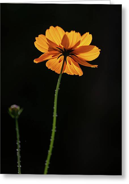 Greeting Card featuring the photograph Behind Light And Shadow by Dale Kincaid
