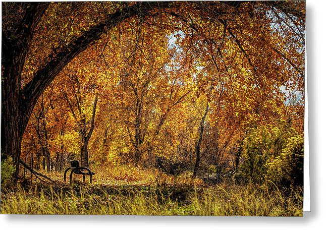 Bench With Autumn Leaves  Greeting Card
