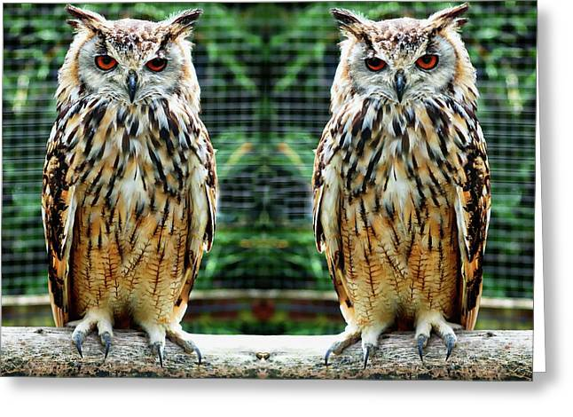 Greeting Card featuring the photograph Bengalese Eagle Owls by Anthony Dezenzio