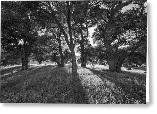 Between The Oaks Greeting Card