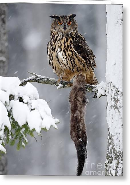 Big Eurasian Eagle Owl Sitting On Snowy Greeting Card