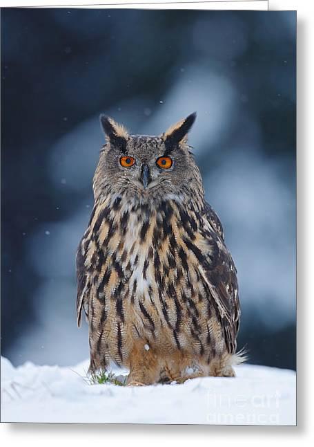 Big Eurasian Eagle Owl With Snowflakes Greeting Card