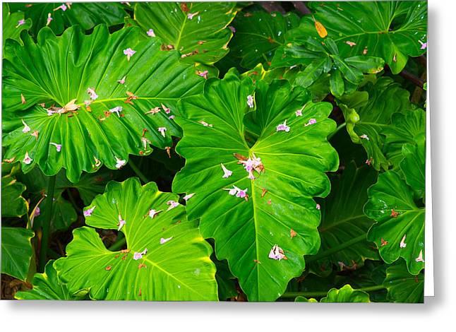 Big Green Leaves Greeting Card