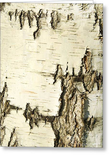 Birch Bark Greeting Card