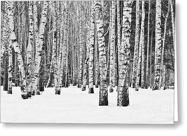 Birch Forest In Winter In Black And Greeting Card