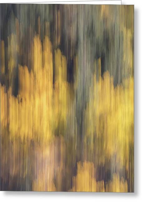 Birch Trees In The Fall  Greeting Card by K Pegg