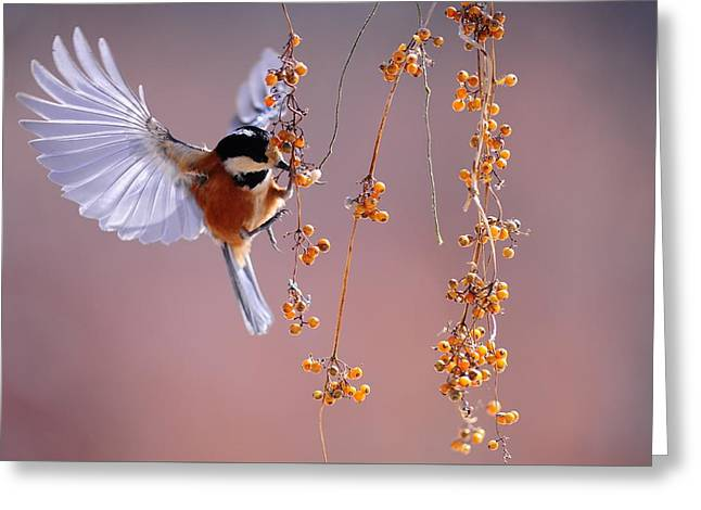 Greeting Card featuring the photograph Bird Eating On The Fly by Top Wallpapers