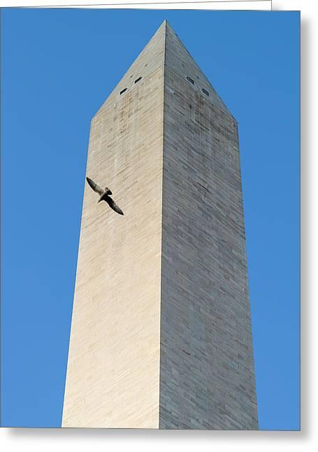 Bird Flying Around The Washington Greeting Card