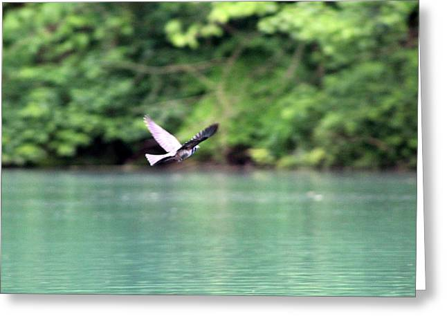 Greeting Card featuring the photograph Bird In Flight by W And F Kreations