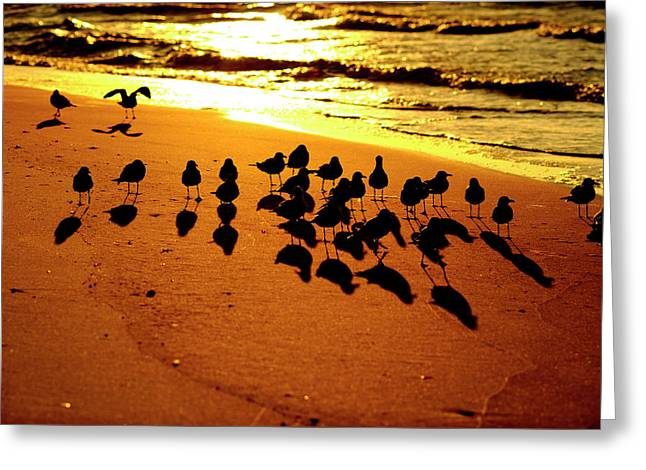 Bird Shadows Greeting Card