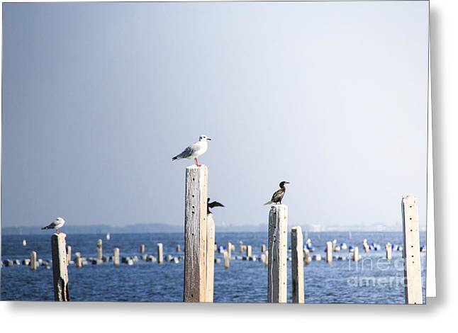 Birds And Wildlife Concept - Seagull On Greeting Card