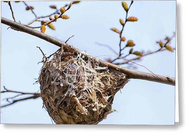 Birds Nest Greeting Card