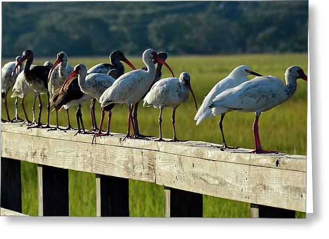 Birds Of A Feather On Jekyll Island Greeting Card