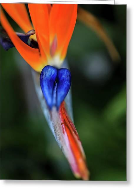 Birds Of Paradise Up Close Greeting Card