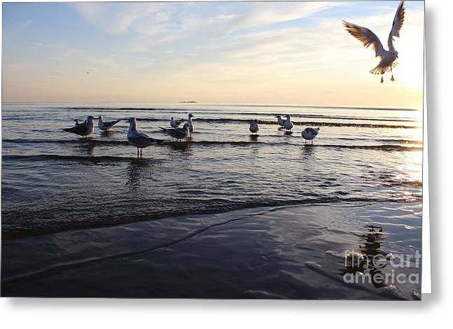 Birds On The Sunset. Seagulls At Sunset Greeting Card
