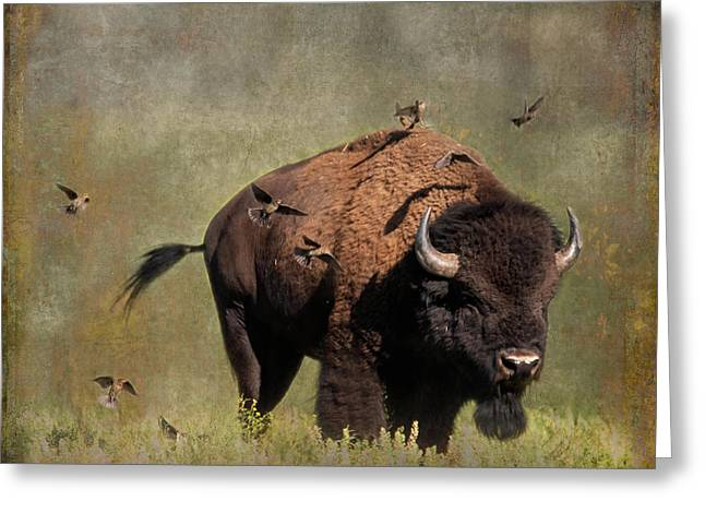 Bison And Friends Greeting Card