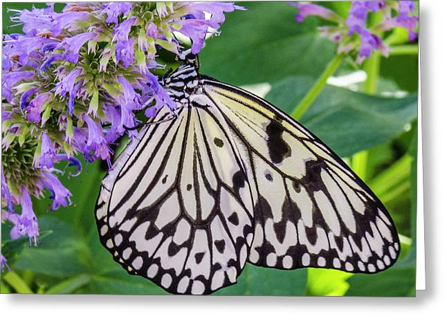 Black And White On Purple Greeting Card