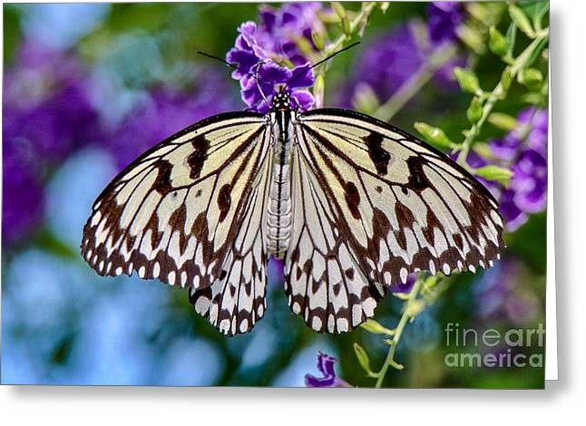 Black And White Paper Kite Butterfly Greeting Card