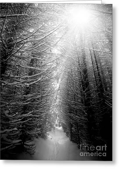 Black And White Winter Forest, Vertical Greeting Card