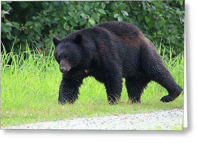 Black Bear Crossing Greeting Card