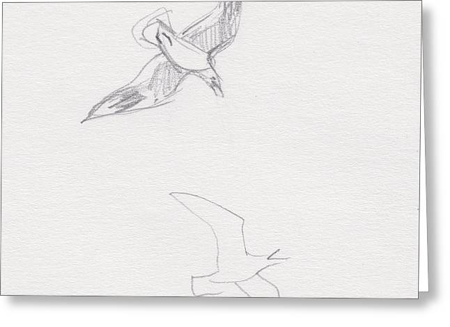 Black-billed Gulls Greeting Card
