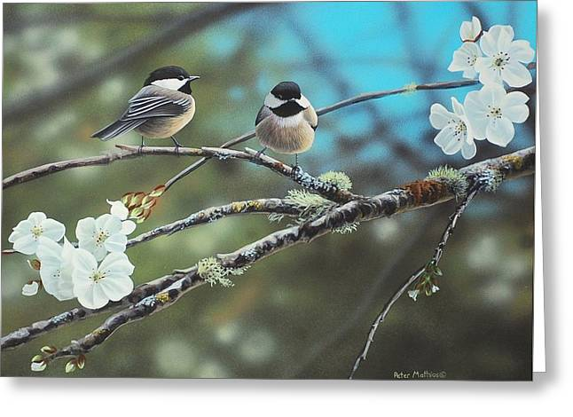 Black Capped Chickadees Greeting Card