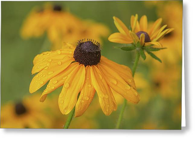 Greeting Card featuring the photograph Black-eyed Susans by Dale Kincaid