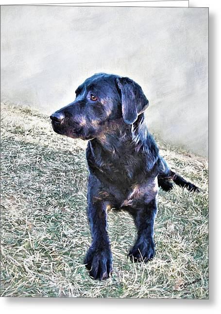 Black Labrador Retriever - Daisy Greeting Card