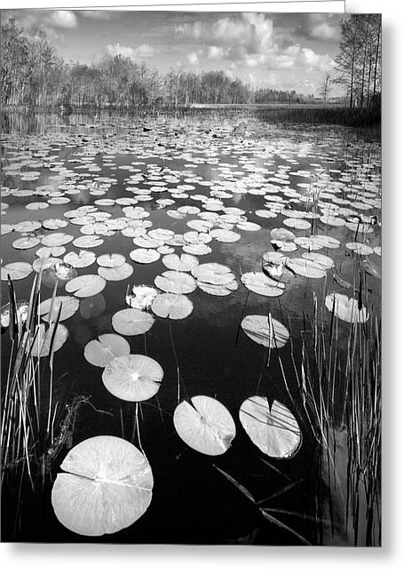 Greeting Card featuring the photograph Black Water by Debra and Dave Vanderlaan