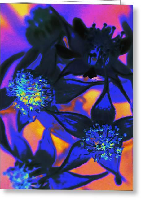Blackberry Flowers Sunset Neon Greeting Card