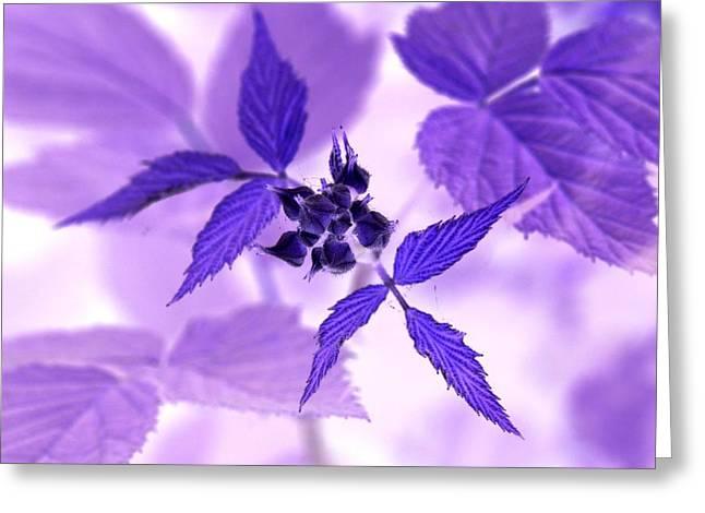 Blackberry In Lavender Negative Greeting Card
