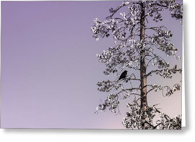 Blackbird In Lavender Greeting Card