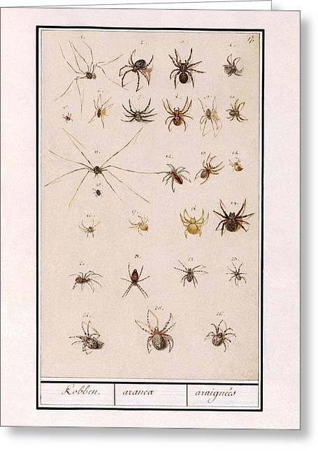 Blad Met Spinnen Greeting Card