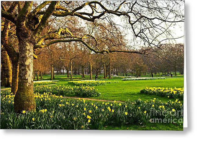 Blooming Daffodils In St Jamess Park In Greeting Card