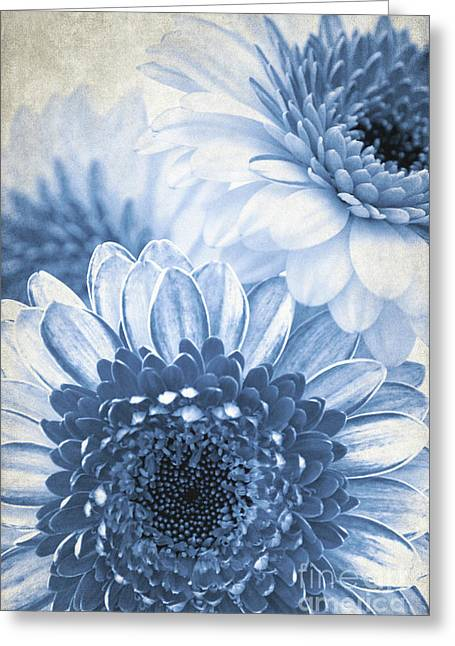 Blue Gerbera Greeting Card