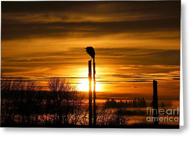 Blue Heron Sunrise Greeting Card