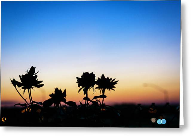 Blue Hour Sunset With Flowers Greeting Card