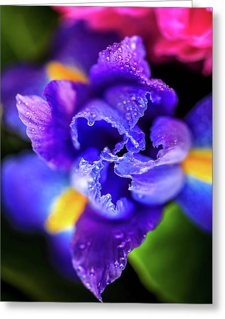 Blue Iris Dance Greeting Card