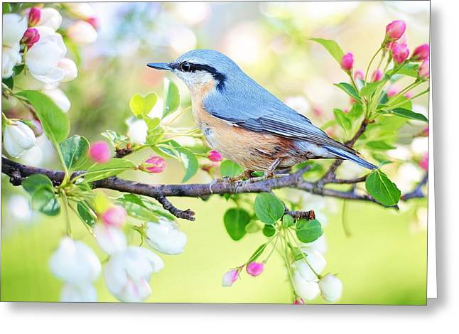 Blue Orange Bird Greeting Card
