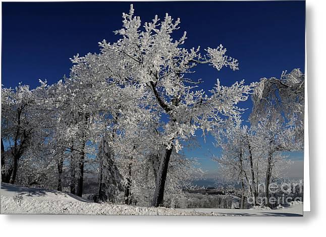 Blue Skies In Winter Greeting Card