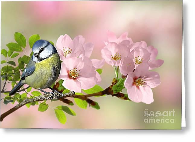 Blue Tit On Apple Blossom Greeting Card