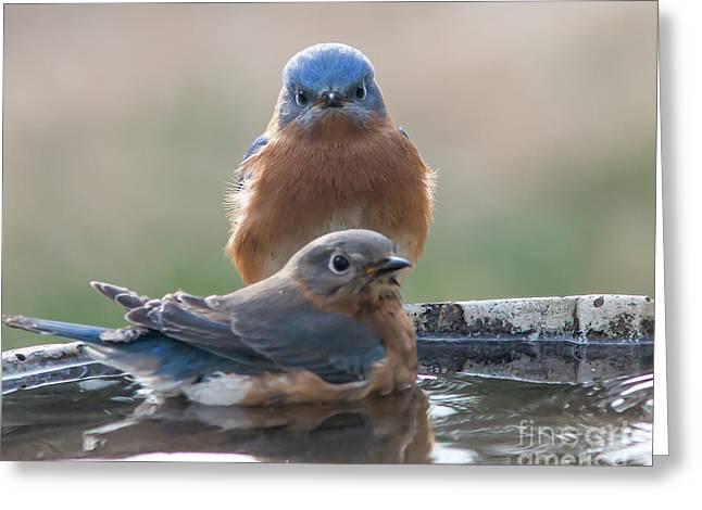Bluebird Gothic Greeting Card