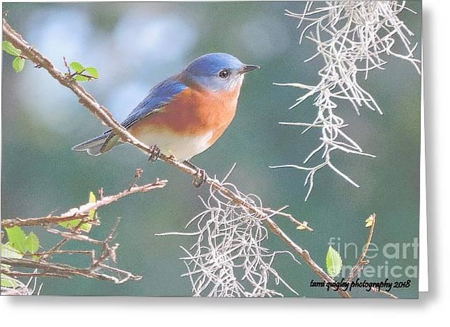 Bluebird In Dixie  Greeting Card