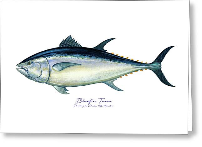 Bluefin Tuna Greeting Card