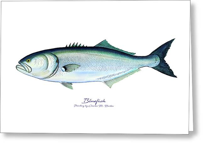 Bluefish Greeting Card