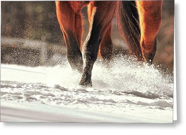 Blustery Trot Greeting Card by JAMART Photography