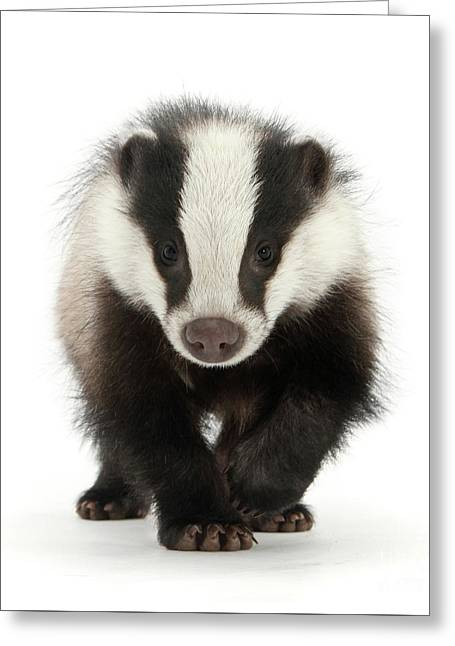 Bodger The Badger Greeting Card