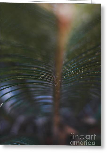 Bokeh Sparkles - Macro Greeting Card